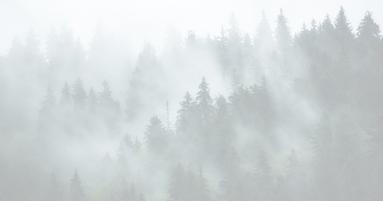 森林浴疗法