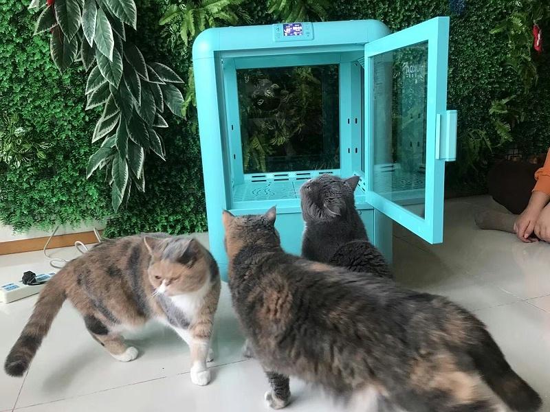 恒温静音宠物烘干箱,猫咪无惧吹干,负离子不伤发质!