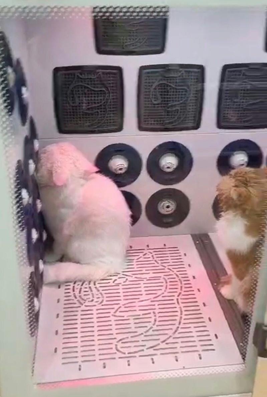 宠物医院 欧科达宠物烘干机