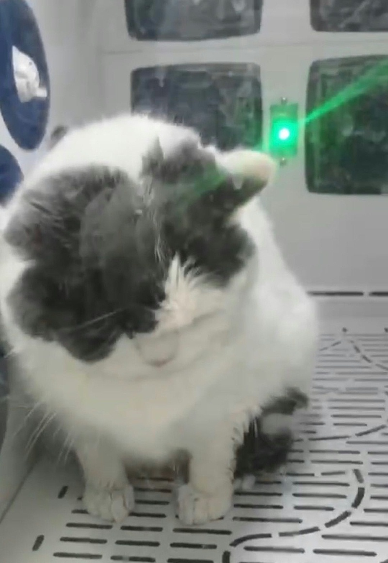 给猫猫洗澡,这款宠物用品少不了!