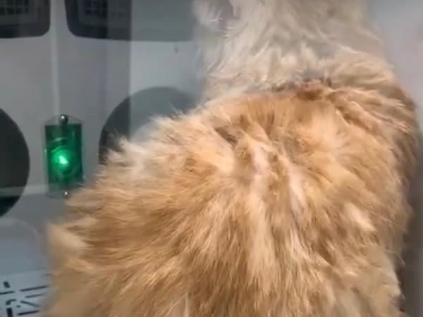 【养宠必备神器】这款宠物烘干机,我真是爱了!