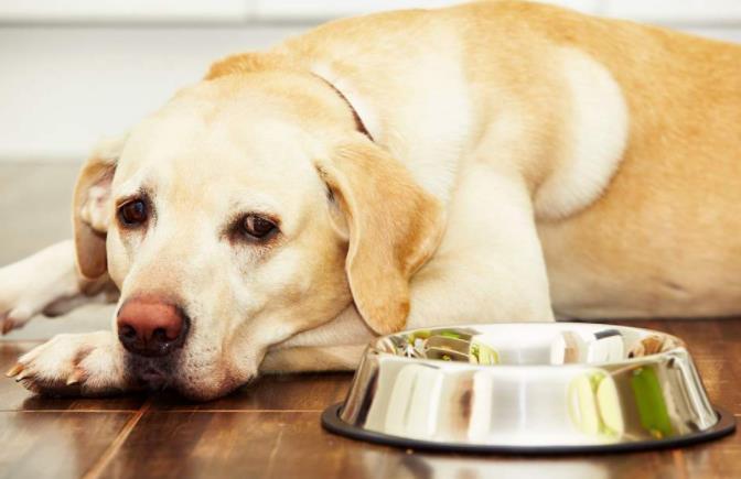 宠物博主强迫宠物狗当大胃王
