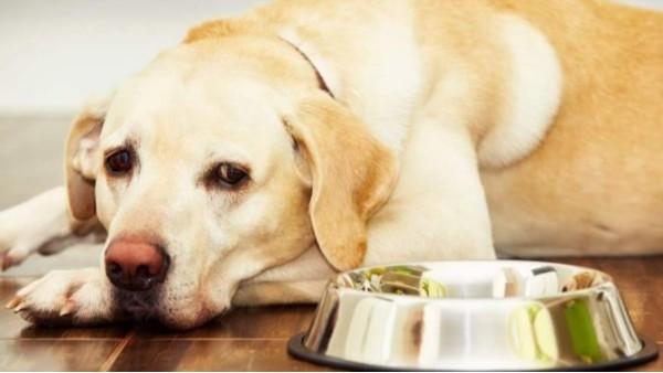 宠物博主让狗当大胃王,一次吃100种零食!狗狗:主人你没有心!