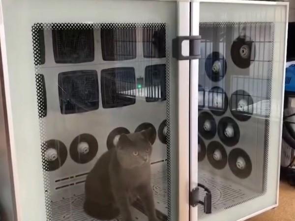 宠物烘干机什么牌子好?选【欧科达】就对了!