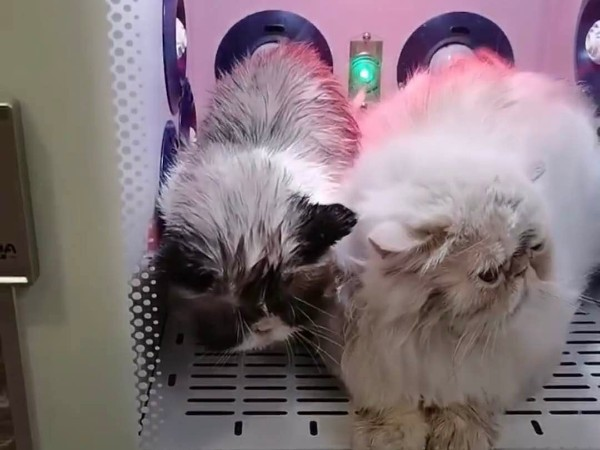 低噪音、高效率——欧科达宠物烘干机
