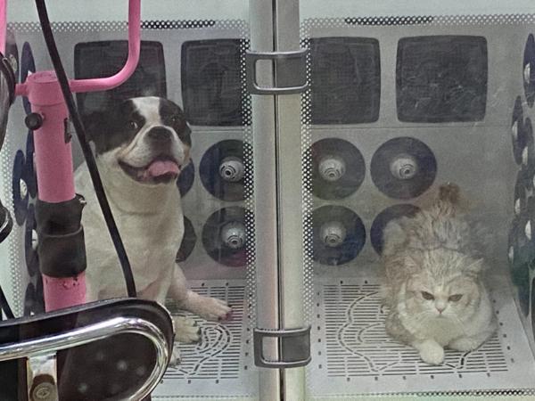猫猫狗狗 欧科达宠物烘干机