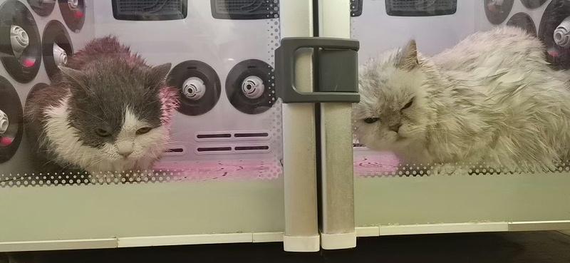 宠物店 欧科达宠物烘干机