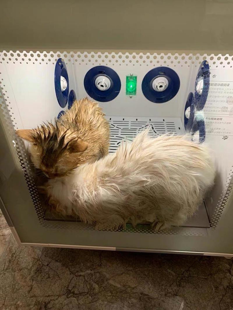 种草宠物烘干机,推荐欧科达宠物烘干机