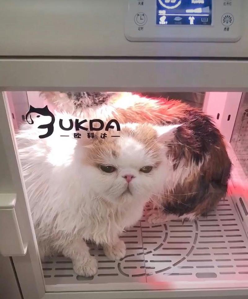 想要猫咪乖乖洗澡吹干?学会这3招,就no problem啦!
