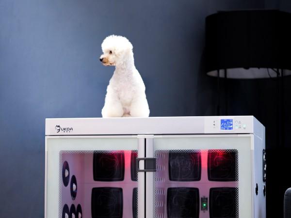 欧科达宠物烘干机丨宠物的腹部和脚掌都给你吹干干~