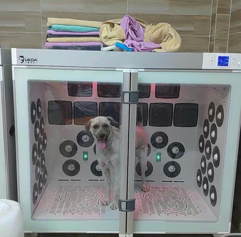 宠物烘干机丨一说给猫狗吹干就是耗时+耗力?不存在的!
