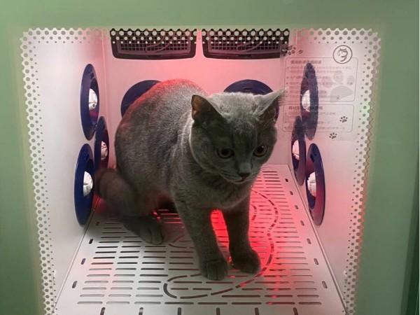 到底是什么神仙宠物烘干机?40分钟就能吹干1只蓝猫!