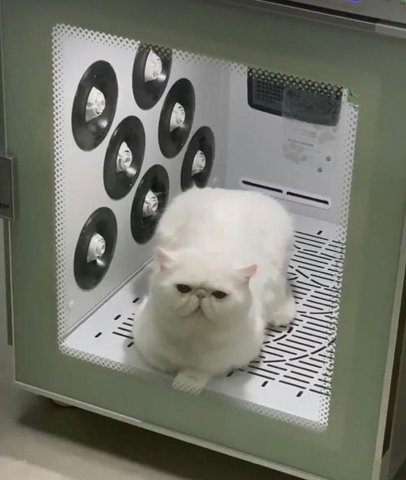 猫舍 欧科达宠物烘干机
