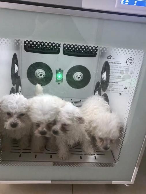 狗狗 宠物烘干机