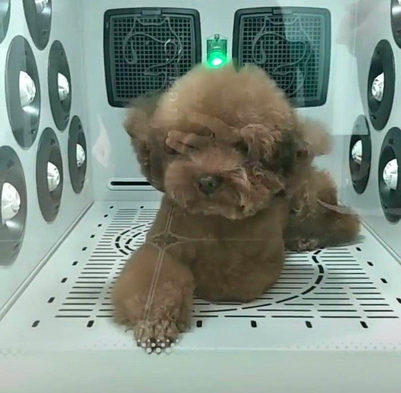 狗狗 宠物护理机 欧科达