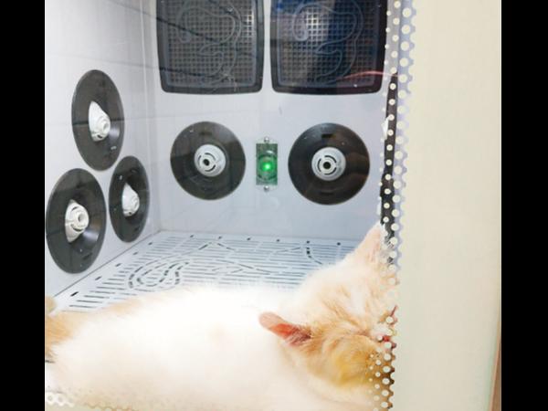猫咪拒绝了风筒,并表示只要「欧科达宠物烘干机」