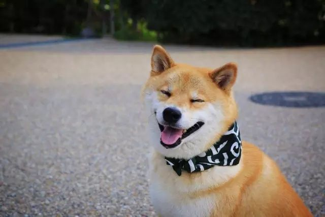 欧科达全自动宠物烘干机 宠物美容店