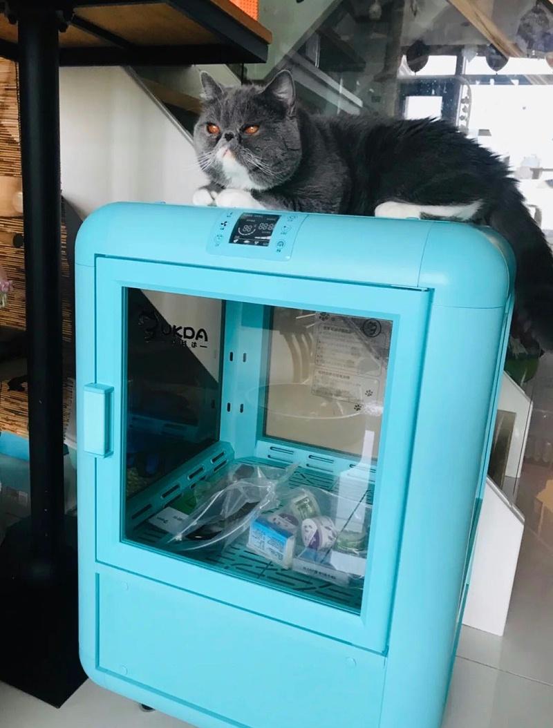 这款静音宠物烘干箱,光颜值就躺赢!胆小猫咪的福音!