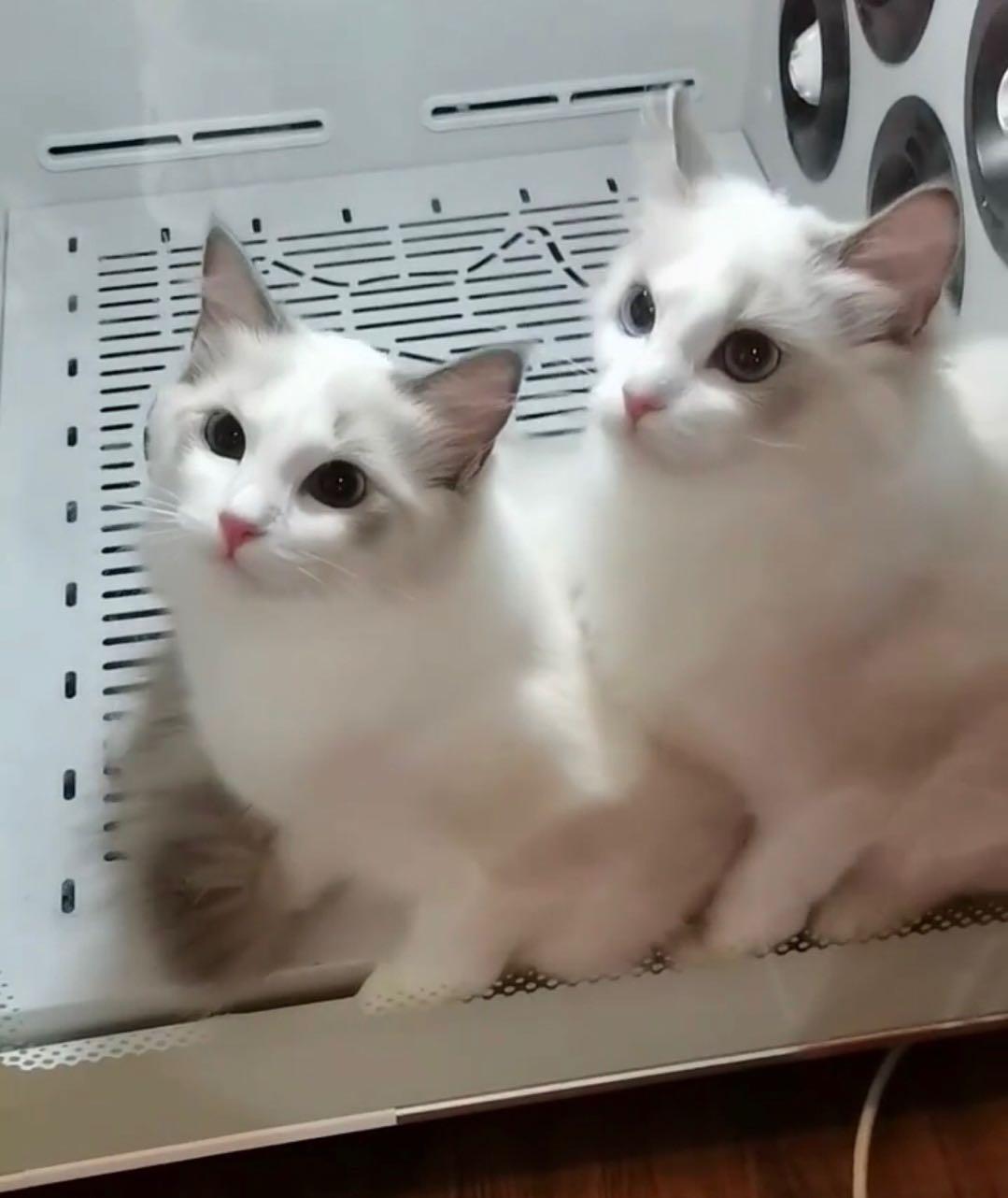 快速吹干、不伤猫咪发质的秘诀竟是它!