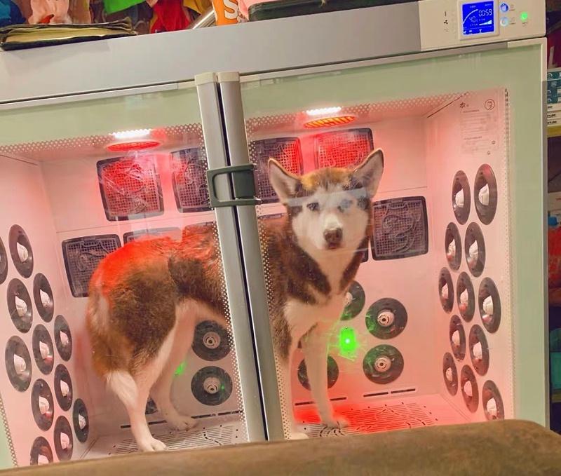 欧科达全自动宠物烘干箱,烘干快,空间大,很安静!