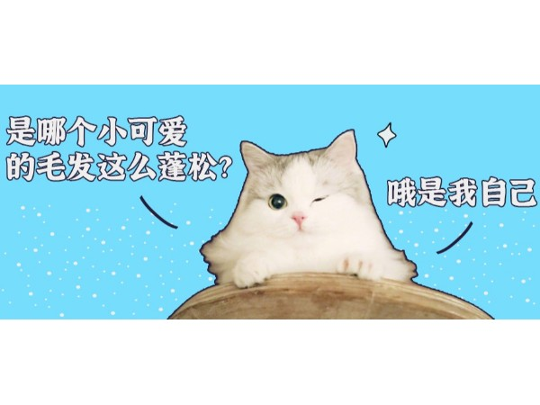 自从有了欧科达宠物烘干机,猫咪毛发变得蓬松柔顺!