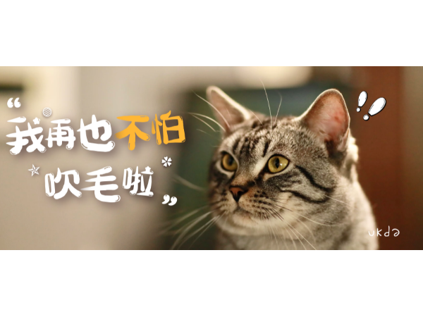 欧科达宠物烘干机丨有了这个宝贝,猫咪再也不怕吹毛发啦~