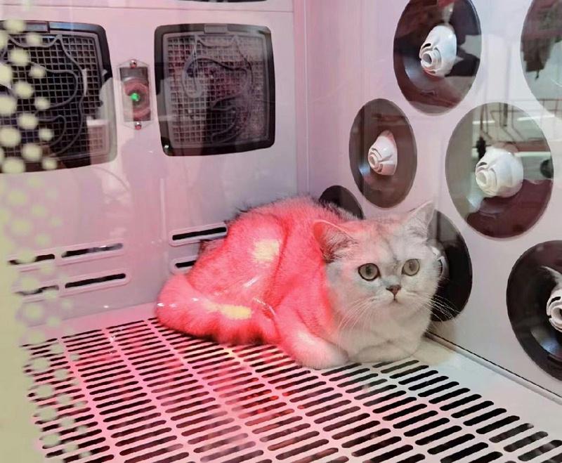 猫舍 猫咪 宠物烘干箱