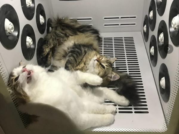 东莞某猫舍宠物护理烘干机案例