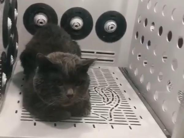 """""""5面空气浴""""的欧科达宠物烘干机,我爱了!"""