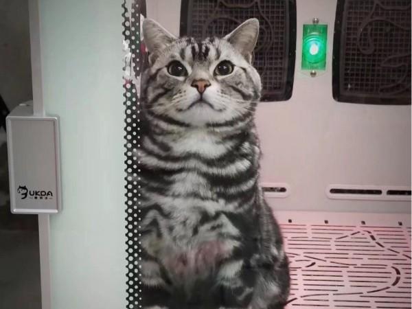 @所有铲屎官,这款猫咪烘干箱真的可!!!