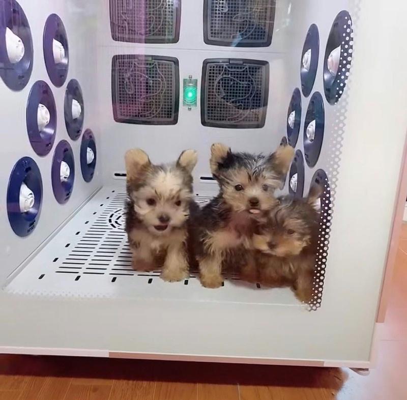 欧科达宠物烘干箱 狗狗