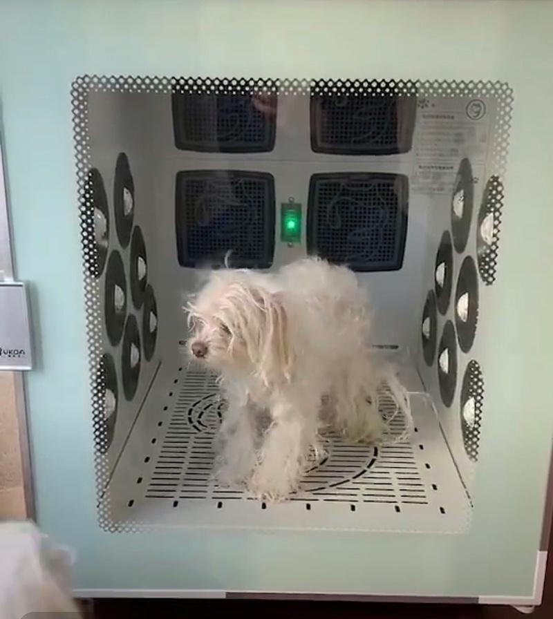 毛孩 欧科达宠物烘干箱