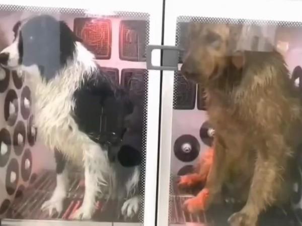 【宠物烘干机】高性价比-欧科达宠物烘干机