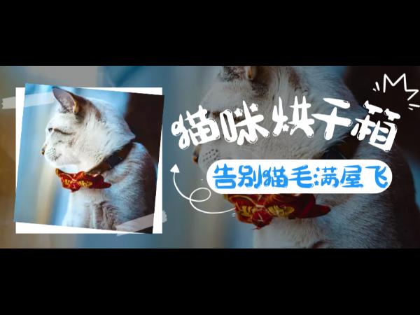 """宠物烘干箱丨猫咪吹干的时候用上它,再也不会""""毛发漫天飞""""啦!"""