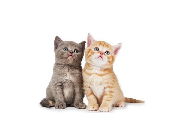 给猫咪吹完毛,2只手快废了~幸好有宠物烘干机!!