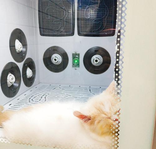 猫咪 欧科达ukda 宠物烘干机