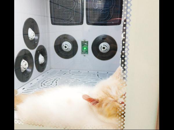 宠物烘干箱哪个牌子好?选【欧科达】就对了!