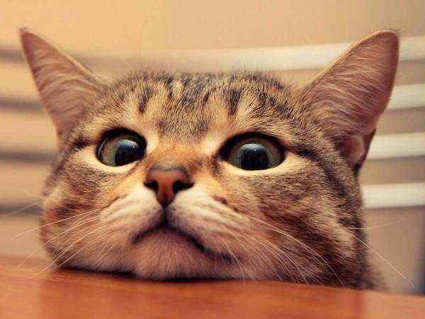 给猫咪吹毛总是手忙脚乱?欧科达宠物烘干机:吹毛so easy!