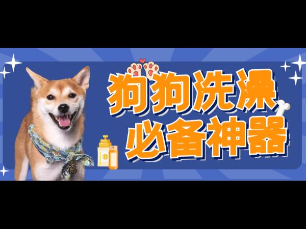 欧科达宠物烘干箱丨解放双手,狗狗洗澡必备神器!
