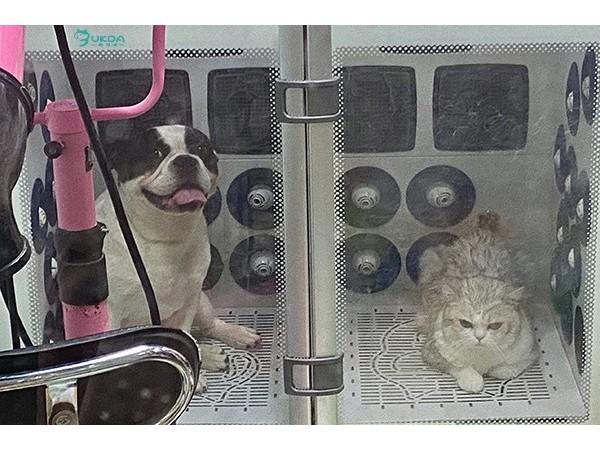 宠物店丨买宠物烘干机,选欧科达!