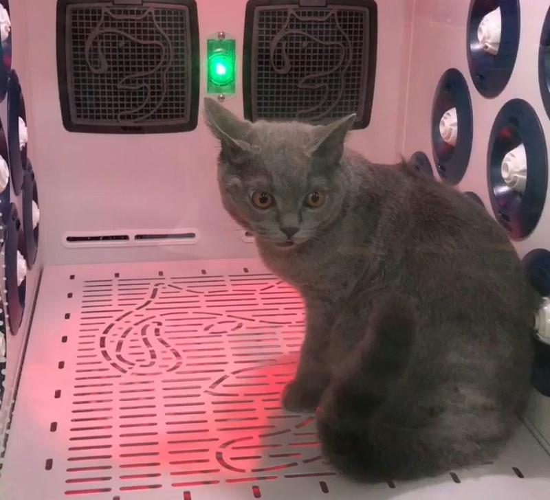 欧科达宠物烘干机 蓝猫