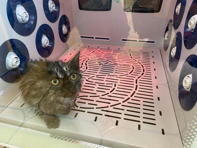 降音降噪,猫咪不害怕不反抗