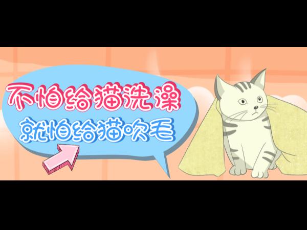 欧科达宠物烘干机丨不怕给猫洗澡,就怕给猫吹毛!