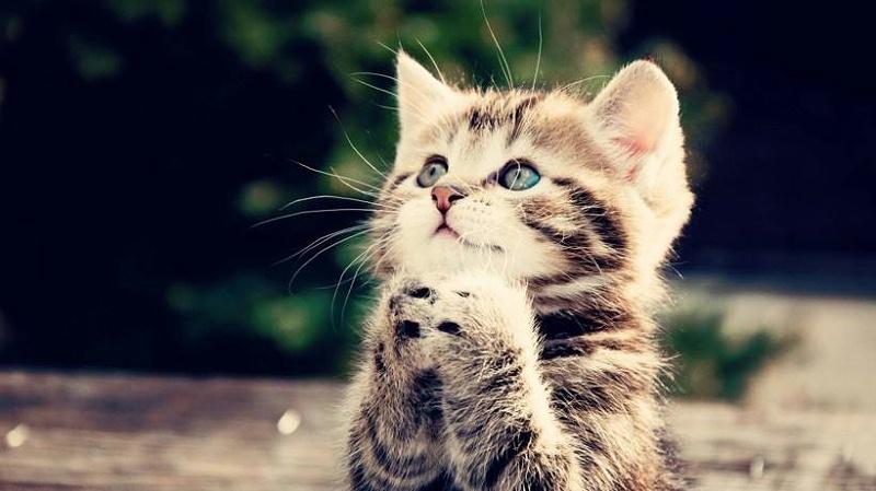 猫舍 宠物烘干机 欧科达