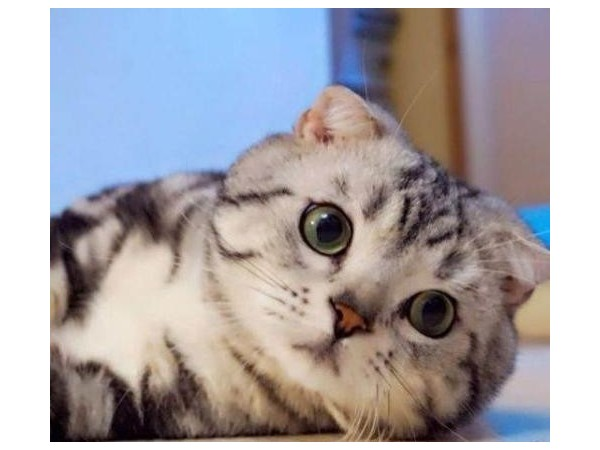 想让猫咪毛发变柔顺?就选欧科达!