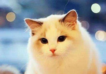 欧科达UKDA 宠物护理烘干机 猫舍