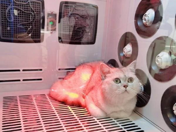 猫咪不肯吹毛怎么破?有一台猫咪烘干箱就OK了!!