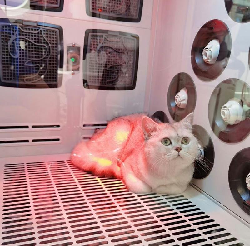 欧科达猫咪烘干箱