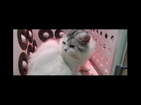 这是什么神仙宠物烘干机_欧科达