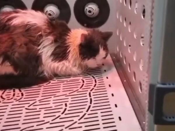 用了2年都没坏,这台宠物烘干机的性价比太太太高了!